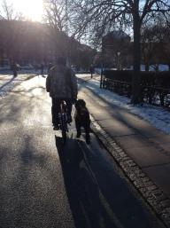 Great way to walk a dog