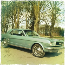 A stunning vintage Mustang.