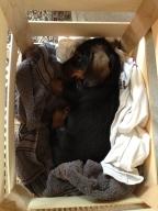 Peanut sleeping in a vegetable crate.