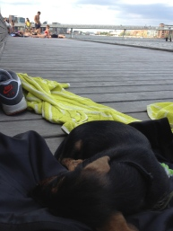 Asleep at the harbour.