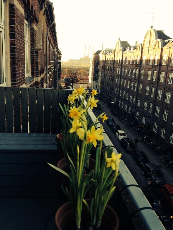 Daffodils on the balcony