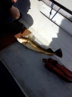 The chosen cod