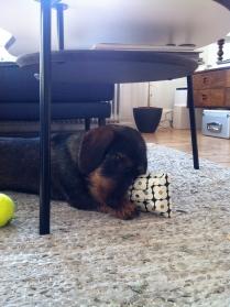 Investigating a birthday present from Trine