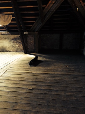 Exploring something in great detail in the loft