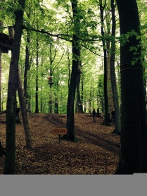 The forest's climbing park