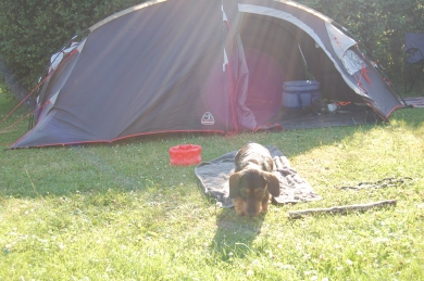 Peanut relaxes at the tent