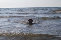 Pea took to the water like we never expected