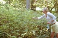 Dorte picking wild raspberries